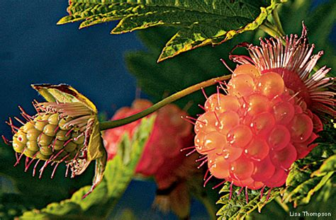 Ten American Native Plants You Can Eat