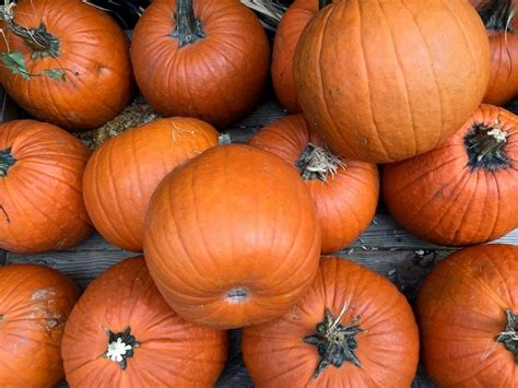 Palatine-Area Halloween 2020: Pumpkin Patches, Events ...