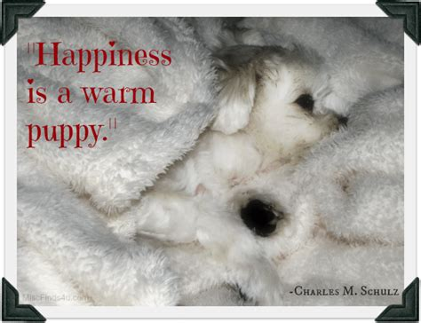 dog quotes happiness   warm puppy gracies favorite