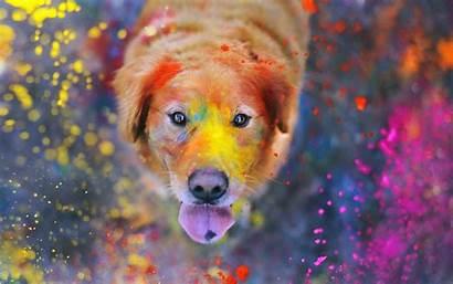 Paint Dog Colorful Splatter Animals Labrador Retriever
