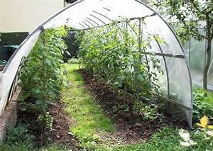 Tomaten Rankhilfe Selber Bauen : tomaten anbauen anbau anleitung gie en geizen d ngen ernten ~ A.2002-acura-tl-radio.info Haus und Dekorationen
