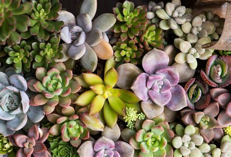 succulents  outdoor annuals mnn mother