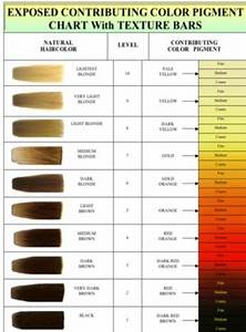 Wella Hair Color Chart Image Result For Bleach Color Chart Hair Color Chart
