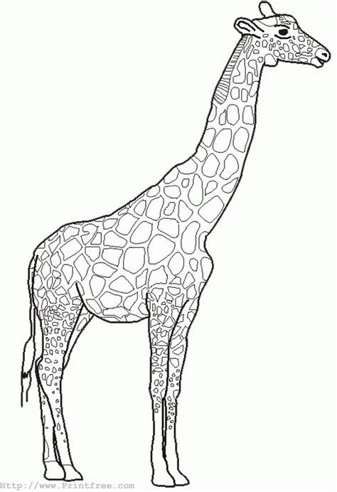 birds and giraffes coloring pages free outline pictures of animals for colouring 5947