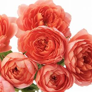 Image Gallery orange garden roses