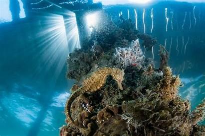 Ocean Acidification Oceans Aquecimento Impactos Global Geographic