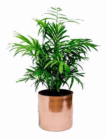 Plant Indoor Monstera Flowers