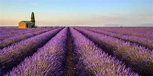 Pflege Von Lavendel : echter lavendel standort pflege berwintern schneiden ~ Lizthompson.info Haus und Dekorationen