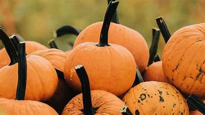 Vegetable Pumpkin Autumn Harvest Grass 4k Hdtv