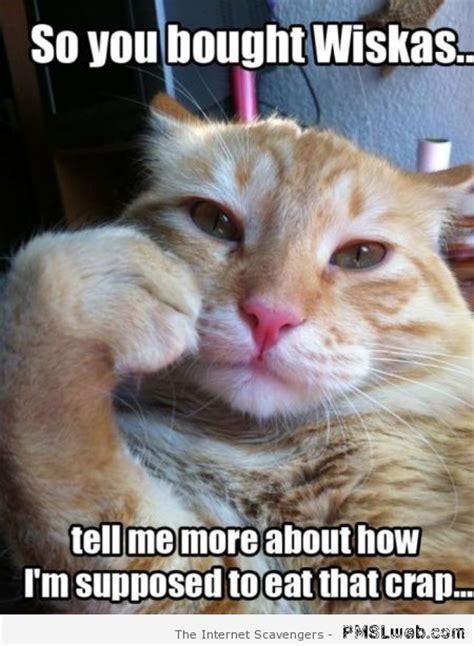Memes Cat - hilarious cat pictures praising feline glory with a smirk pmslweb