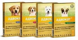 Таблетки при простатите за 900 рублей