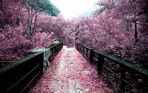 nature, , trees, , path, , pink, , blurred, wallpapers, hd, , , , desktop, and, mobile, backgrounds