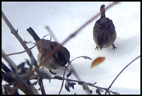 city birds eating bread and pictures from bbc