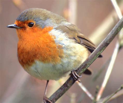 file bird 24 12 2007 jpg wikipedia