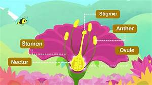 How Do Flowering Plants Reproduce
