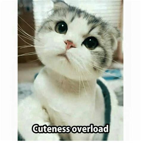 Cuteness Overload Meme - 25 best memes about memes