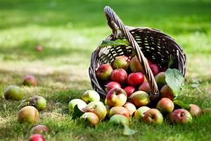 Obst verstopfung