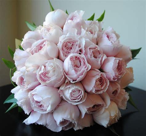 pale pink david austin roses bouquet bouquet wedding flower