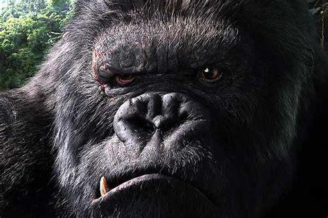 photo du film king kong photo  sur  allocine