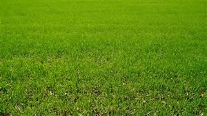 Comment Refaire Sa Pelouse : choisir sa pelouse petit guide pour bien choisir sa tondeuse with choisir sa pelouse amazing ~ Carolinahurricanesstore.com Idées de Décoration