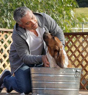 How Often To Shower Puppy by How Often To Bathe A My Dogs Dogs Cesar Millan