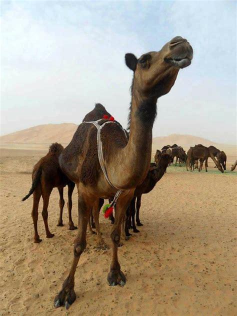 Salalah Travels Tours Trips