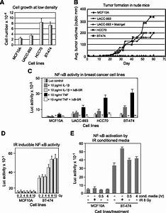 acquisition of stable inducible up regulation of nuclear With stable 5v from old cells