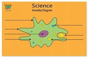 Ameba Diagram - Cliparts.co
