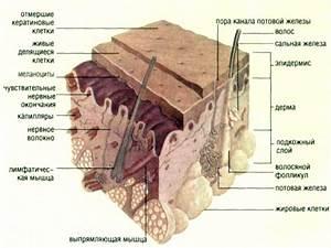 Ксеомин от морщин на лбу