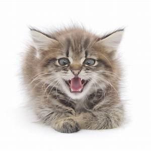Laver Un Chaton : comment laver chaton 2 mois ~ Nature-et-papiers.com Idées de Décoration