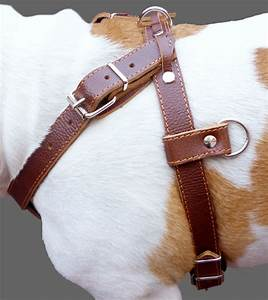 Pulling Genuine Leather Dog Harness 30 U0026quot