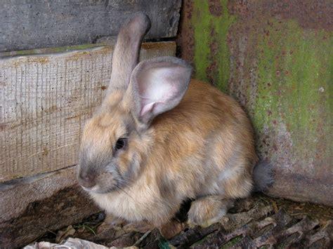 Wie Reinige Ich Meinen Kaninchenstall Richtig? » Tierheilkunde