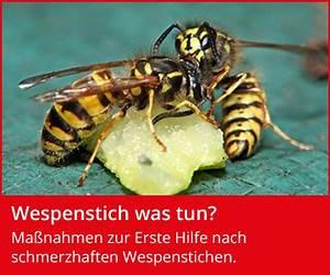 Was Tun Gegen Wespen : wespen was hilft gegen wespen wespenfeuerwehr ~ Whattoseeinmadrid.com Haus und Dekorationen