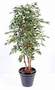 Arbre D Intérieur : arbre artificiel ficus exotica plante d 39 int rieur cm vert cr me ~ Preciouscoupons.com Idées de Décoration