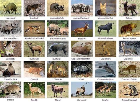 Eish SA Southern African Mammals