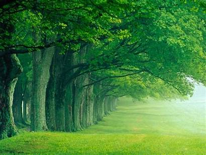 Forest Nature Widescreen Pretty Trees Summer Gorgeous