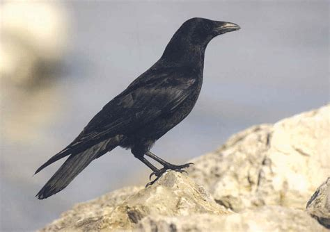 siege courtepaille mysterieux oiseaux 1 le miroir du temps