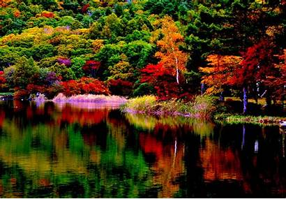 Fall Autumn Colors Foliage Lake Forest Reflection
