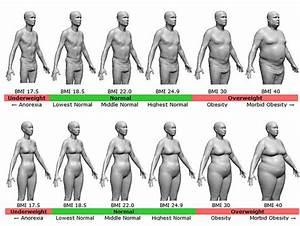 Body Fat Percentage Diagram