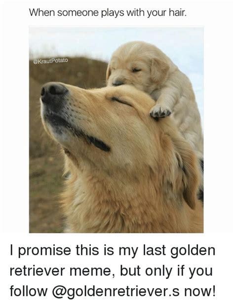 Golden Retriever Memes - 25 best memes about golden retriever meme golden retriever memes