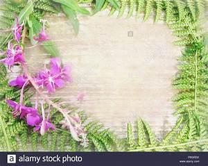Bild Rahmen Lassen : floral background mit wilden blumen und kr utern f r einladung ansage gru karten wildes holz ~ Yasmunasinghe.com Haus und Dekorationen