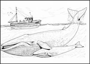 Beste Jonah Und Der Wal Malvorlagen Zum Ausdrucken Galerie