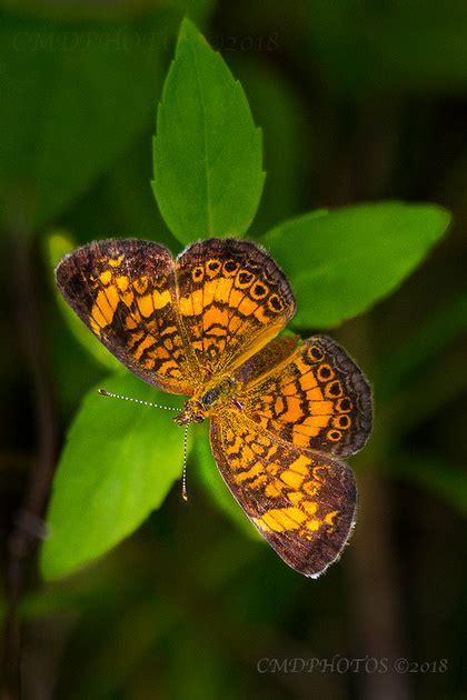 CMDPHOTOS   Butterfly Star