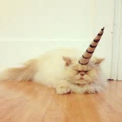 cat a unicorn community post the about caticorns