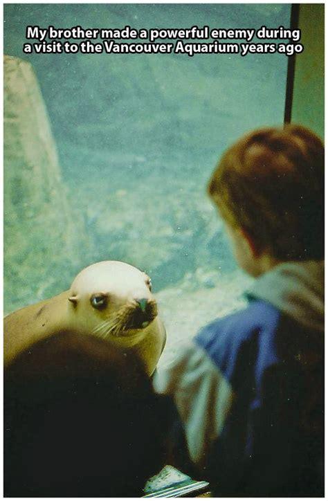 funniest      aquarium pleated
