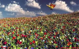 Wiese Mit Blumen : der farben thread seite 142 allmystery ~ Watch28wear.com Haus und Dekorationen