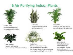 three essential houseplants for clean indoor air kamal