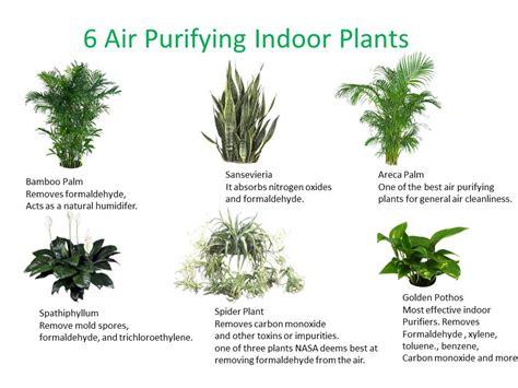 best office desk plants best office plants plants for office low light plants