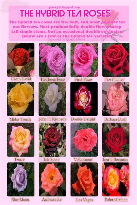 Diagrams Make You Master Growing Roses Balcony