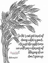 Coloring Wheat Zen Adult Galations Tired Bible Adults Tangle Lets sketch template